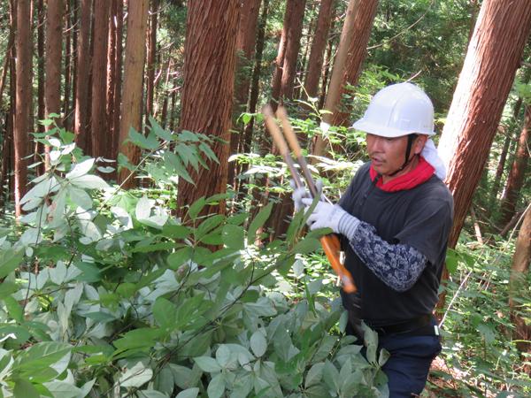 写真は、岩手県八幡平の森(「ラピアス電機」アロマ事業部)