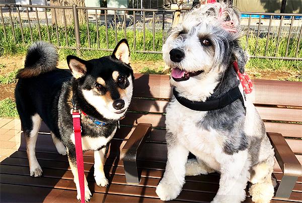 セラピストブログ犬と会話