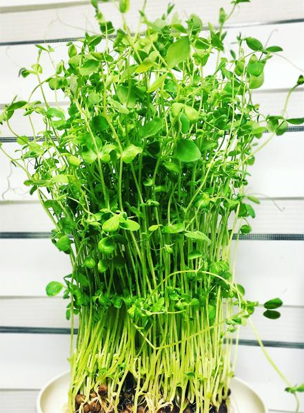 セラピスト植物アロマ