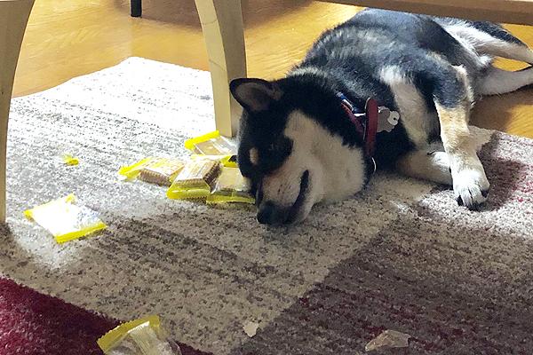 雑誌セラピストブログ犬2